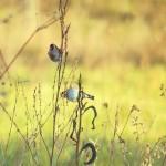 Goldfinch #birdingintuscany #birdingitaly #birdingtuscany #birdinginitaly #birding #birdingfun #birdinginnature #birdinginthewild #birdingphotography…