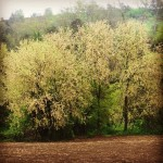 Early spring in Italy #willows #spring #ecotourism #instanature #instanaturelover #nature…