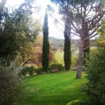 Tuscany garden #discovertuscany #igerstoscana #instatuscany #shareyourtuscany #tuscan #tuscanigram #tuscanlife #tuscanlovers…
