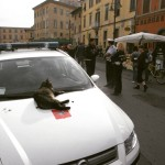 Italian cats #travel #travelling #instatravel #travelgram #igtravel #traveller #ontheway #ontheroad…