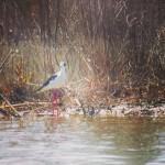 Birding in Tuscany #birding #birdingfun #birdinginnature #birdinginthewild #birdingphotography #birdingtours #birdwacth…