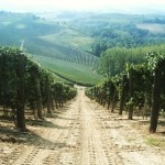 Vineyards #langhe #nebbiolo #barolo #instawine #italianwine #italianwines #italywine #italywines #wine…